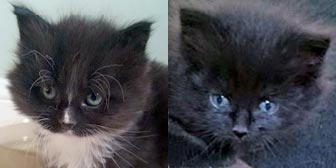 Rescued kittens Jess and Fluffy from Whinnybank Cat Sanctuary, Newburgh, Fife, homed through Cat Chat