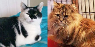 Pair of cats homed from Rugeley Cats Society