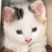 Kitten Homed from Eight Lives Cat Rescue, Sheffield