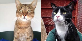 pair of cats adopted from City Cat Shelter, Brighton