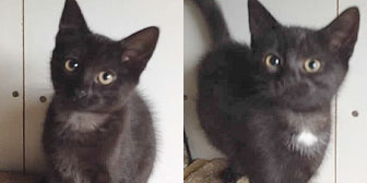 Two black cats homed from Burton Joyce Cat Welfare