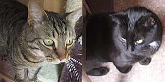 Pair of Cats homed from Little Cottage Rescue, Luton