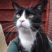 black and white cat homed Brighton