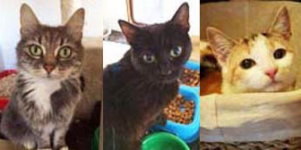 iley, Jerry & Kitty from Rugeley Cats Society, Rugeley, homed through Cat Chat