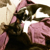 Penny and Dime from BB's Cat Rescue, Tendring, homed through Cat Chat