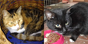Rescue cats Delilah and Janice from Kirkby Cats Home, Nottingham, homed through Cat Chat