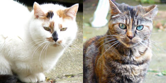 Sally and Mabel, Rescue cats from Bromley & District Cat Rescue, homed through Cat Chat