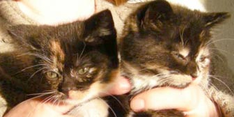 Rescue cats Anna & Elsa from Kathy's Cat Rescue, Merseyside, homed through Cat Chat
