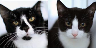 Rescue cats Jango & Jethro from Yorkshire Animal Shelter, homed through Cat Chat