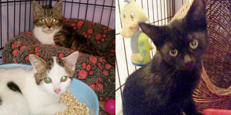 kittens homed from Rugeley Cats Society