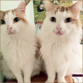pair of cats homed Doncaster