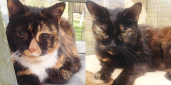 Sister cats homed together from City Cat Shelter Brighton