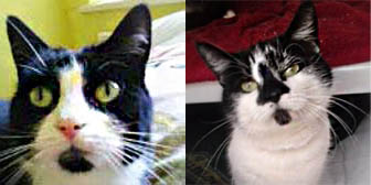 Holly and Dottie from Cat Action Trust 77, Leeds, homed through Cat Chat