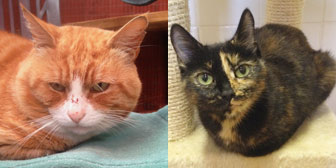 Rescue cats and kittens from City Cat Shelter, Brighton homed through Cat Chat
