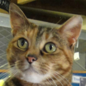Katrina from National Animal Welfare Trust, Thurrock, homed through Cat Chat