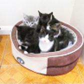 Kittens from Grendon Cat Shelter, Atherstone, homed through Cat Chat