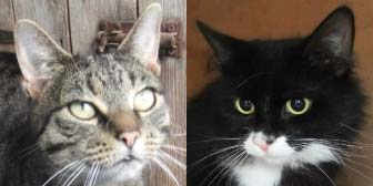 Purdy & Bailey from Kirkby Cats Home, homed through Cat Chat