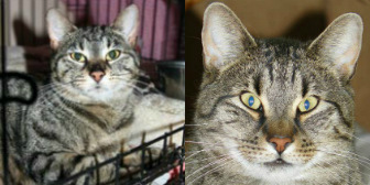 Molly, Marty, Toby and Bessie from Bromley & District Cat Rescue, Bromley, homed through Cat Chat