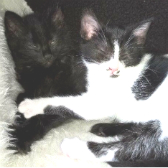 Willow & Malley, Pixie & Dixie, Honey and kittens from Little Cottage Rescue, Luton, homed through Cat Chat