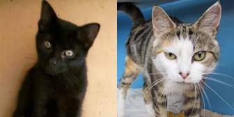 Jaz and Pauline from Ann & Bill's Cat & Kitten Rescue, Hornchurch, homed through Cat Chat