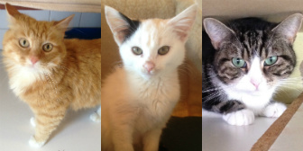 Frankie, Charley, Bella and others from City Cat Shelter, homed through Cat Chat