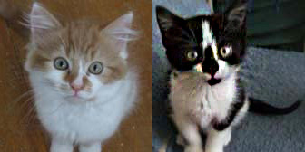 Jackman & Lucy from Cat Action Trust 1977, Kilmarnock, homed through Cat Chat