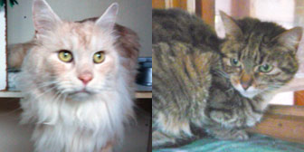 Rescue cats Mario and Talusa from Marjorie Nash Cat Rescue, Amersham, Bucks, homed through Cat Chat