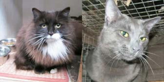 Rescue cats Sassy & Joe from Whinnybank Cat Sanctuary, homed through Cat Chat