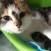 Rescue cat Vera from Canino Animal Welfare, Northampton, homed through Cat Chat