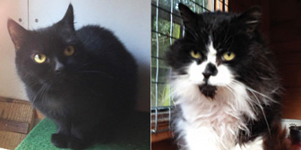 Janie, Sasha and more, from Kirkby Cats Home, Nottingham, homed through Cat Chat