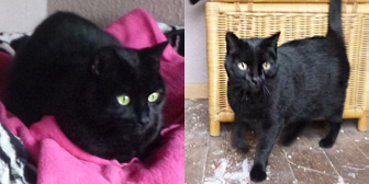 Tickle & Woody, from All Animal Rescue, Southampton homed through Cat Chat