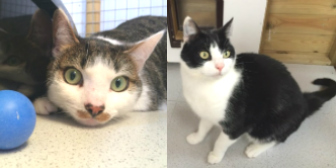 Cosmo & Dibs from Blue Cross Rehoming Network (County Durham), Durham, homed through CatChat