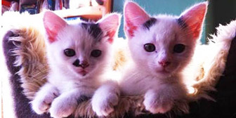 Pixi & Pudsey from 8 Lives Cat Rescue, homed through Cat Chat