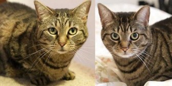 Eleanor & Emily, from Anim-mates, Sevenoaks, homed through Cat Chat