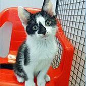 Louie from National Animal Welfare Trust, Clacton, homed through Cat Chat