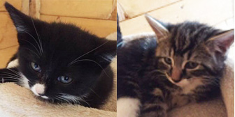Rosie & Jim & others, from Little Cottage Rescue, Luton, homed through Cat Chat
