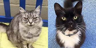 Smokey & Leo, from Mitzi's Kitty Corner, Totnes, homed through Cat Chat