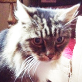 Stanley, from National Animal Welfare Trust Tameside, Manchester, homed through Cat Chat