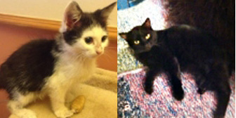 Elsa, Saab and more from Cats in Need, Hinckley, homed through Cat Chat