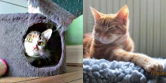 Kitty & Knut, from 8 Lives Cat Rescue, Sheffield, homed through Cat Chat