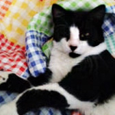 Wonky from Little Cottage Rescue, Luton, homed through Cat Chat