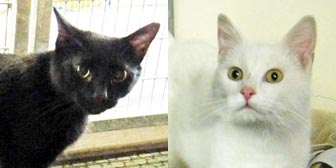 Ella & Sonny from National Animal Welfare Trust, Thurrock, homed through Cat Chat