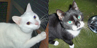 Polo and Liquorice from Marjorie Nash Cat Rescue, Amersham, homed through Cat Chat