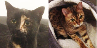 Emily & Lola, from Cats in Need, Hinckley, homed through Cat Chat