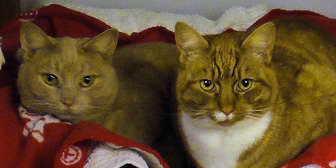 James & Robin, from National Animal Welfare Trust, Thurrock, homed through Cat Chat