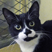 Milo, from National Animal Welfare Trust, Thurrock, homed through Cat Chat