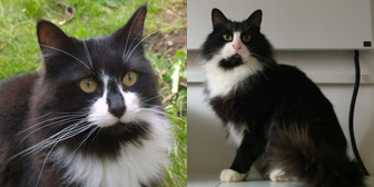 Cleo and Theo, from Twilight Cats Senior Cat Rescue, Evesham, homed through Cat Chat