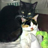 Jet & Jinja, from 8 Lives Cat Rescue, Sheffield, homed through Cat Chat