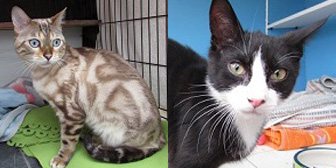 Milo & Gordon, from Ann & Bill's Cat & Kitten Rescue, Hornchurch, homed through Cat Chat