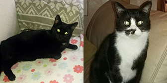 Billy & Smudge, from Cat Action Trust 1977, Leeds, homed through Cat Chat